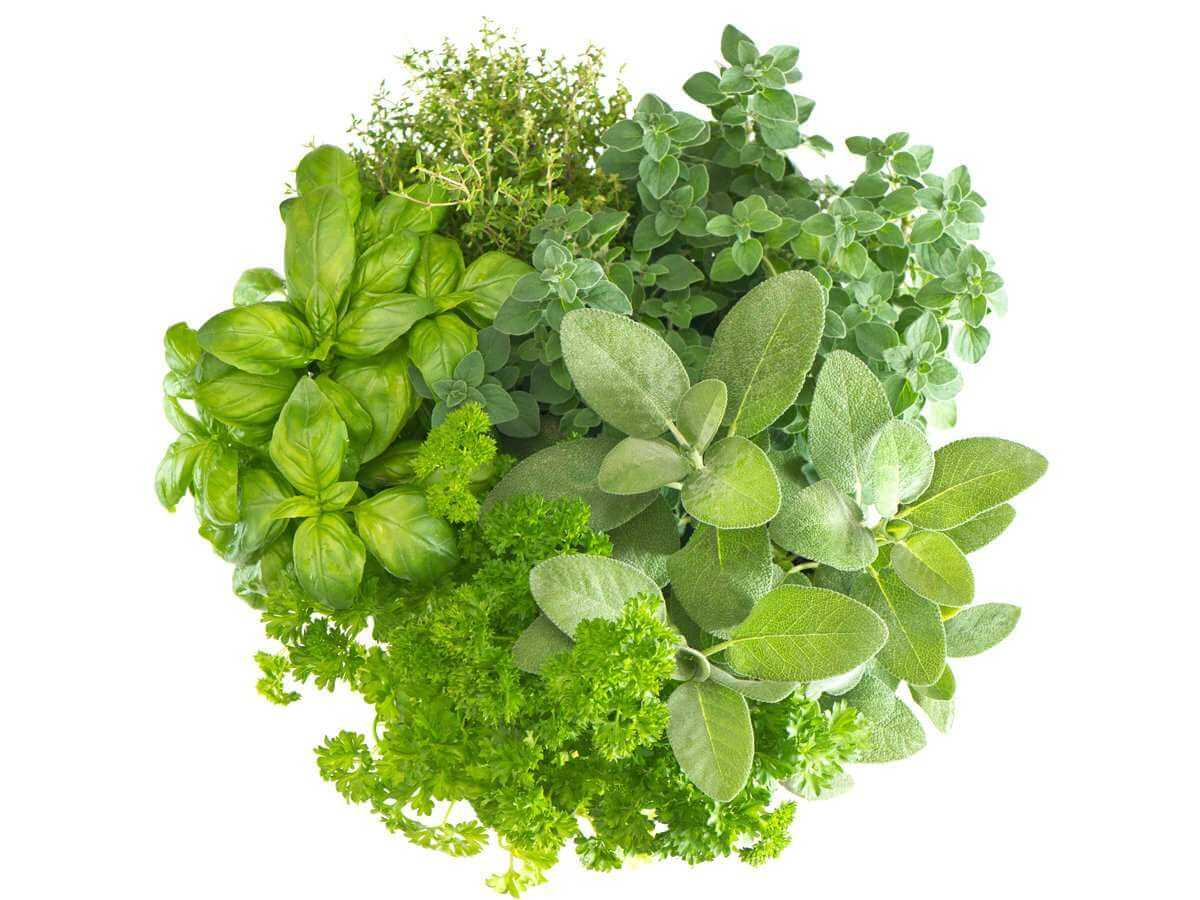 Top 5 Herbs for Healthy Skin
