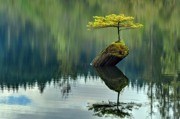 Fairy Lake Tree, British Columbia