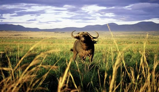 Kidepo Valley National Park,