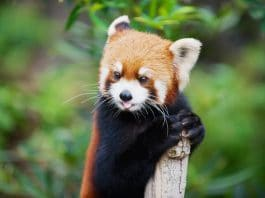 Animals That Will Be Extinct By 2050